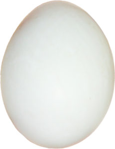 single-duck-egg2